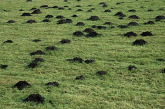 Mole hills Stock Images