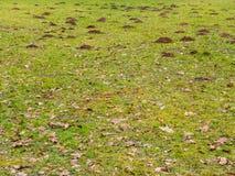Mole hills Royalty Free Stock Image