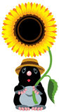 Mole holding sunflower vector illustration
