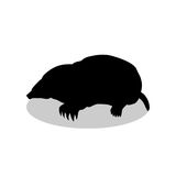 Mole insectivores mammal black silhouette animal Royalty Free Stock Photo