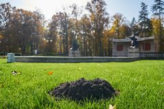 A mole of mole on a well-kept park lawn. Destroyed lawn in a beautiful garden. A mound of mole against the background of historic garden architures Stock Photo