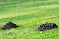 Mole molehill Stock Image