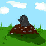 Mole on molehill Stock Images