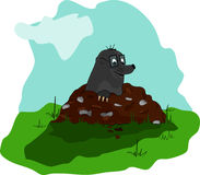 Mole on molehill Stock Image
