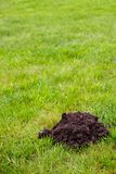 Mole Mound Stock Photos