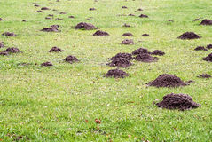 Mole mound stock photography