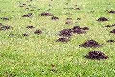 Mole mound Stock Photography