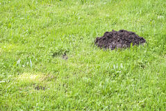 Mole mound Royalty Free Stock Photography