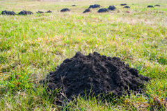 Mole mounds Stock Images