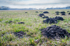Mole mounds Royalty Free Stock Photo