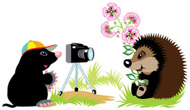 Mole photographer royalty free illustration