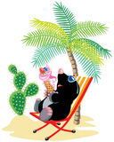 Mole relaxing on the beach Stock Photography