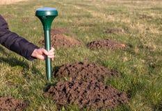 Mole repeller. Placing a mole repeller in the garden Stock Photo