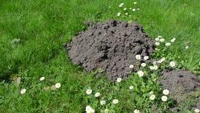 Mole trap dead Stock Photo