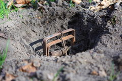 Mole trap. Sticking out of a molehill. Also a symbol for danger and security Stock Image