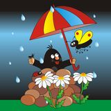Mole and umbrella Stock Photo