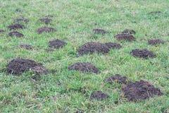 Mole und Garten Stockfotos