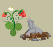 Mole and wild strawberry. Royalty Free Stock Photography