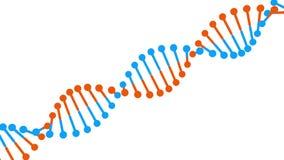 Molecola blu-arancio girante del DNA su fondo bianco illustrazione di stock