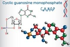 Molecola ciclica del cGMP della guanosina monofosfato È un nucleot royalty illustrazione gratis