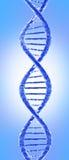 Molecola del DNA Fotografia Stock Libera da Diritti
