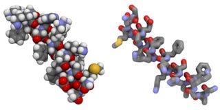 Molecola del peptide di Magainin 2 Immagini Stock