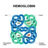 Molecola dell'emoglobina illustrazione vettoriale