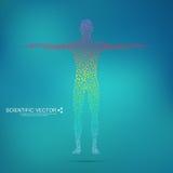 Molecola della struttura dell'uomo DNA del corpo umano del modello astratto Medicina, scienza e tecnologia Vettore scientifico pe illustrazione vettoriale