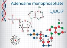 Molecola di AMP dell'adenosina monofosfato, è un estere di phosph Immagini Stock Libere da Diritti