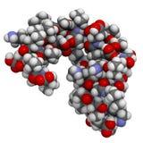 Molecola di Dermcidin-1L Immagini Stock