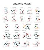 Molecole degli acidi organici messe Fotografia Stock