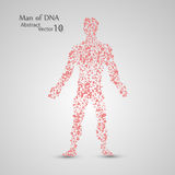 Molecular structure in the form of man. Vector elegant illustration Royalty Free Illustration