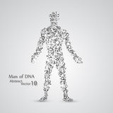 Molecular structure in the form of man. Vector elegant illustration Stock Photo
