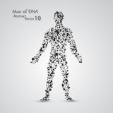 Molecular structure in the form of man. Vector elegant illustration Royalty Free Stock Image