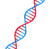 Molecule dna. On white background Royalty Free Stock Image
