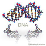 Molecule structure of DNA Stock Image