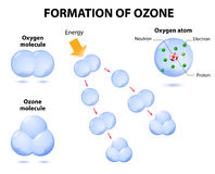 Molecules ozone and oxygen. Schematic process photochemical ozone formation. Ozone is a form of oxygen with three oxygen atoms bonded together. Ozone absorbs vector illustration