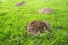 Molehill Royalty Free Stock Photos