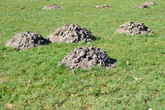 Molehill on field in spring time Royalty Free Stock Photography
