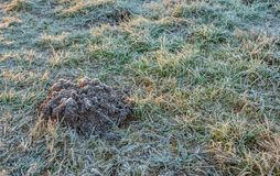 Molehill in frosted grass. Closeup of a molehill in the grass in winter. Both the molehill and the blades of grass are covered with hoarfrost royalty free stock photo