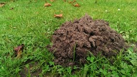 Molehill Royalty Free Stock Photo