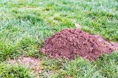 Molehill in a garden Royalty Free Stock Image