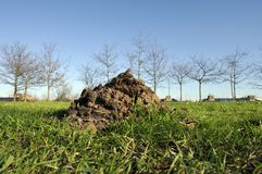 Molehill on green gras Royalty Free Stock Photo