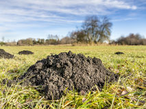 Molehill Stock Photography