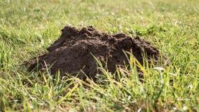 Molehill on a meadow Royalty Free Stock Photography