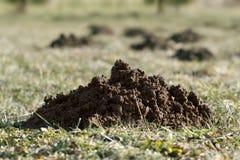 Molehill in open air stock photography