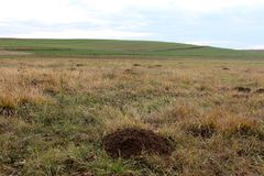 Molehill surrounded with dried grass with green hill and cloudy sky in background Royalty Free Stock Photo