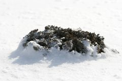 Molehill in winter Stock Image