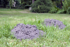 Molehills Royalty Free Stock Image