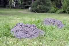 molehills Стоковое Изображение RF